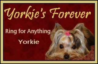 Yorkies forever