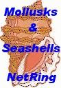 Mollusks & Seashells NetRing